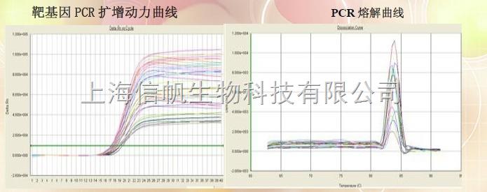 荧光定量PCR检测试剂盒