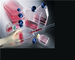小鼠杂交瘤细胞ER细胞