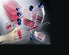 社鼠皮肤成纤维样细胞;CWBRS2