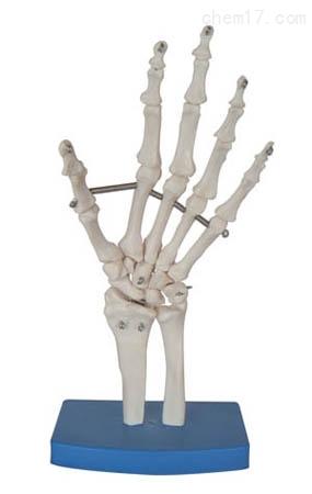 手关节模型 人体各大器官