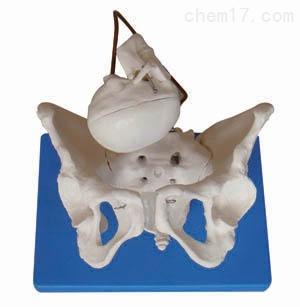助产示教模型  人体各大器官