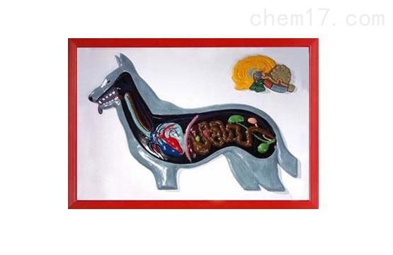 狗解剖浮雕模型