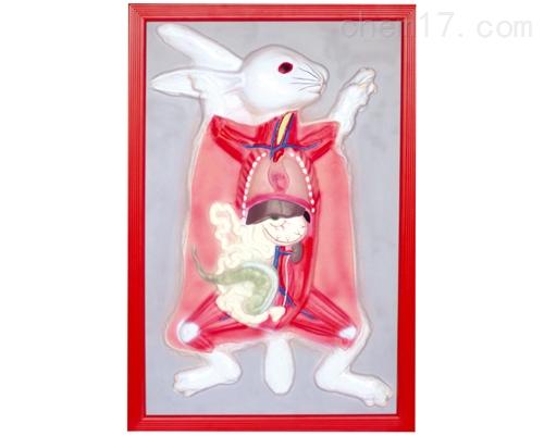 家兔解剖浮雕模型