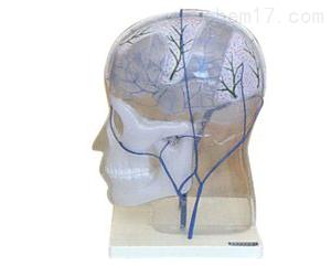 颅内外静脉吻合模型