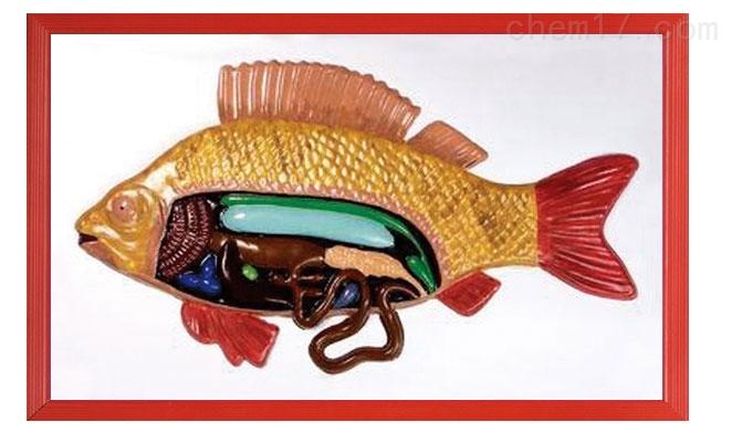 鱼解剖浮雕模型
