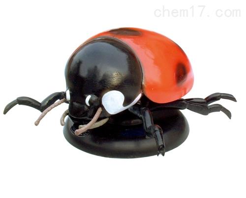 仿真瓢虫模型 生物模型