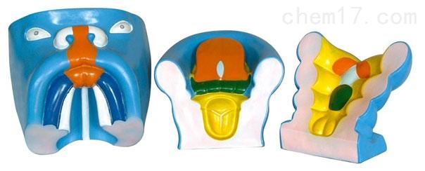 口腔、鼻及舌的发生(3部件) 生物模型