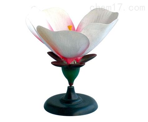 桃花模型  生物模型