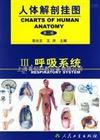 循环系统挂图|人体解剖挂图