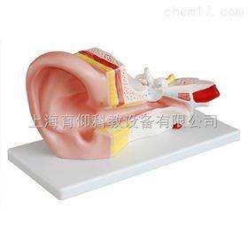 耳解剖模型(3倍)|脉管感觉系统模型