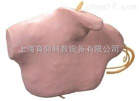 中心静脉穿刺插管模型|临床诊断实训模型