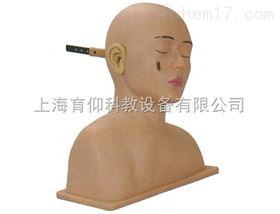 高级耳诊断模型|临床诊断实训模型
