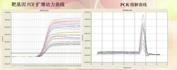 实时荧光定量pcr检测服务