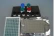 大鼠色素上皮衍生因子(PEDF)ELISA试剂盒