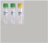 EB病毒转化的人B淋巴细胞;KMY0905