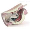 臀部肌肉注射模型1
