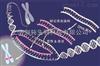 JRD1066抗体定制实验